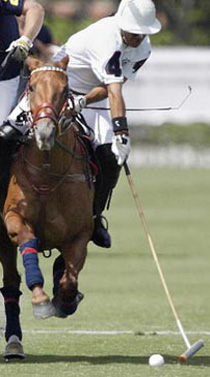 joueur polo cheval maillet
